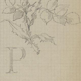 엉겅퀴와 장미 습작과 문자 P