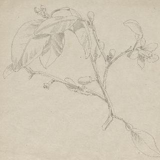꽃이 만발한 자두나무 가지 습작