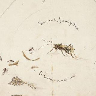 우화 소재를 위한 장식 모델 : 매미와 개미