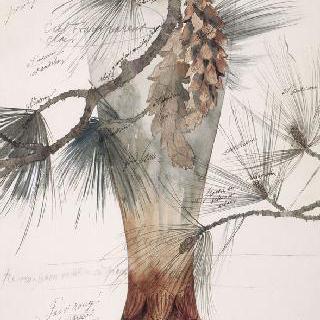 솔방울과 나뭇가지 장식의 수정으로 된 화병 모델