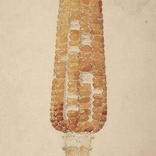 옥수수 술 형태의 수정으로 된 화병 모델