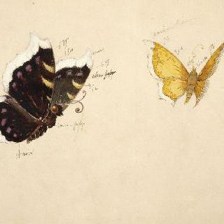 데이지꽃을 위한 두 장식 모델 : 날고 있는 두 마리 나비