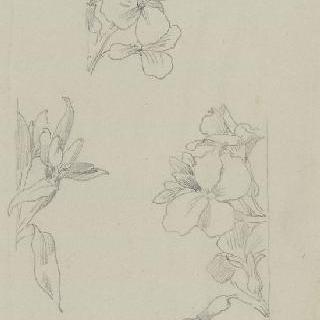 꽃무우의 꽃 습작 3점
