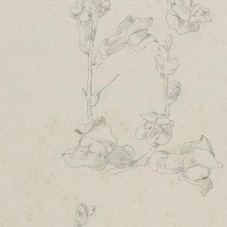 금어초꽃 습작 3점