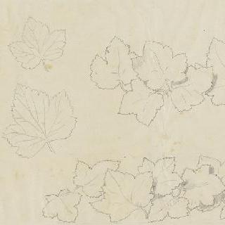 포도나무 잎 습작 6점