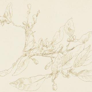 꽃이 핀 오렌지나무 가지 습작 이미지