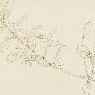 꽃이 핀 나뭇가지 습작