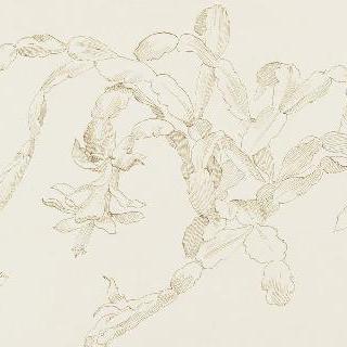 꽃이 핀 선인장 가지 습작