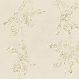 난초꽃 습작