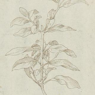 잎이 있는 잔가지 습작