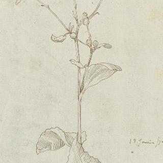 꽃 습작 (카모밀라)