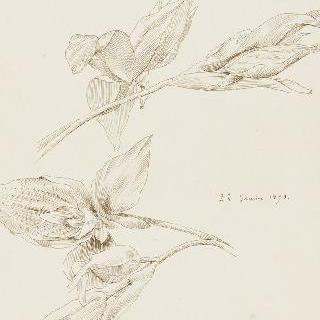 난초꽃 습작 2점
