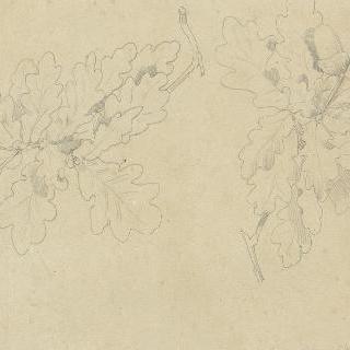 잎과 도토리가 달린 떡갈나무 가지 습작 2점