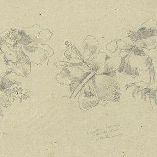 아네모네꽃 습작 3점