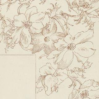 아네모네꽃 화관을 나타내는 테두리 습작