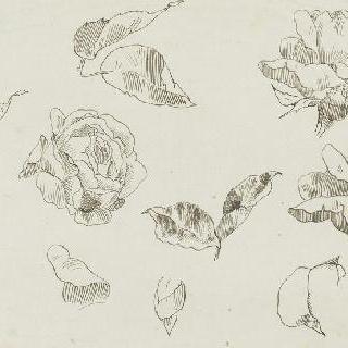 꽃과 장미 잎 습작 11점