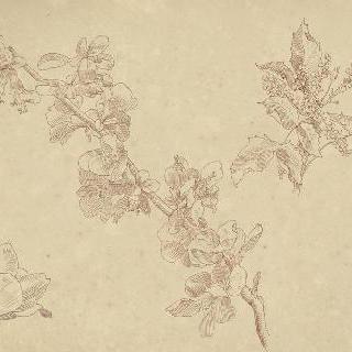 꽃이 핀 배나무 가지 습작