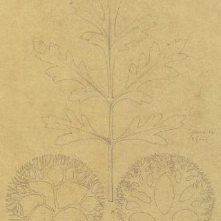 식용 바닷말 잎 습작 2점과 카모마일 잎 습작