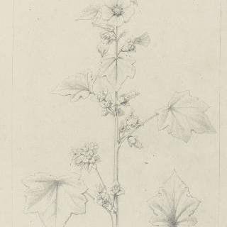 접시꽃 잎 습작