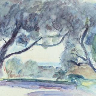 카뉴의 올리브나무