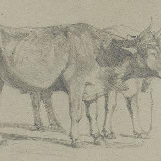 멍에를 쓴 두 마리의 소
