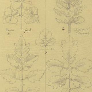 매발톱꽃잎, 애기똥풀 잎과 토마토 잎 습작