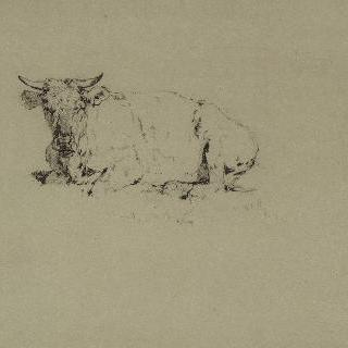 누운 소의 앞모습