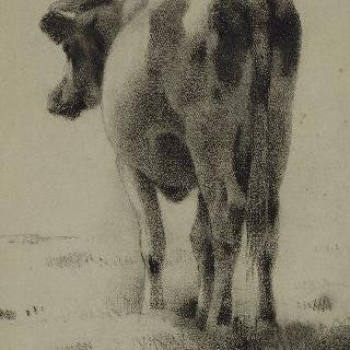 서 있는 소의 뒷모습