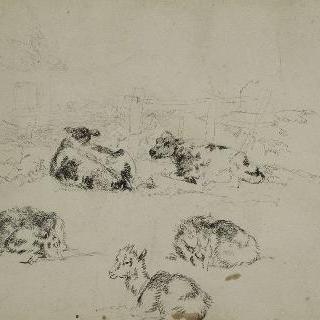 두 마리의 소 습작 : 농가의 세 마리의 염소와 뒤쪽의 울타리