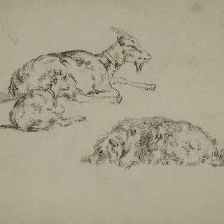 염소와 새끼 염소 : 누워있는 개