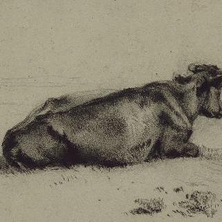 우측을 향해 누워있는 소