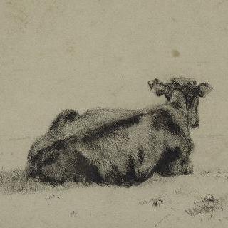 소의 뒷모습