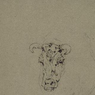 소의 앞모습