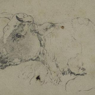 좌측을 향한 소