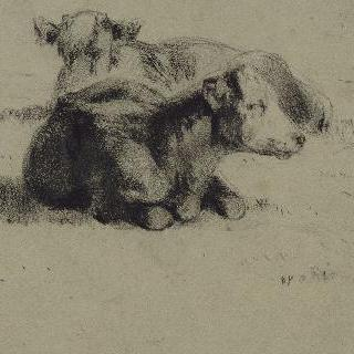 누워있는 두 마리의 소
