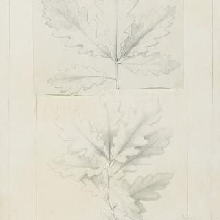 떡갈나무 잎 습작 2점