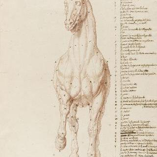 가죽이 벗겨진 서 있는 말의 정면상