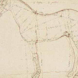 왼쪽을 향한 말의 측면과 측정 표시