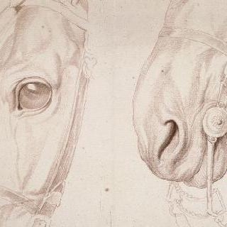 묶여있는 말의 머리의 부분 습작 2점