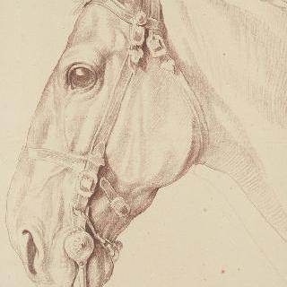 왼쪽 방향의 묶여있는 말의 머리