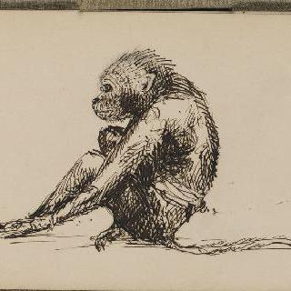 화첩 : 원숭이 한 마리 습작