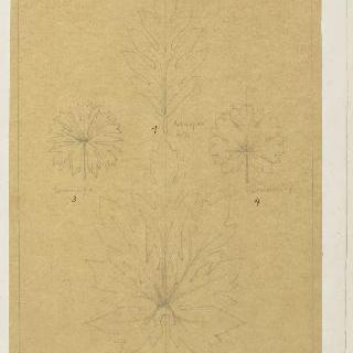 파파야 잎, 빵나무 잎과 제라늄 잎 습작