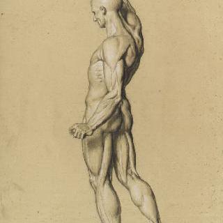 오른팔을 들고 서 있는 피부를 벗긴 측면 인체도