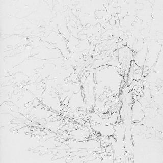 퐁텐블로 숲의 작은 양산 아래의 연인