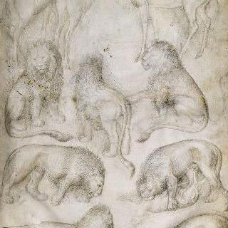 일곱 마리의 사자와 세 마리의 사슴