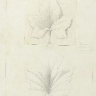 멜론 잎과 브리온 잎 습작