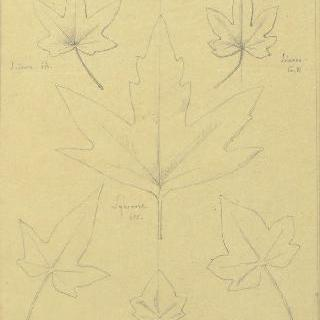 송악 잎과 무화과나무 잎 습작