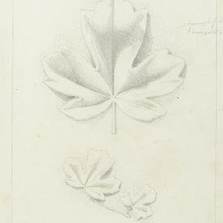 단풍나무 잎 습작