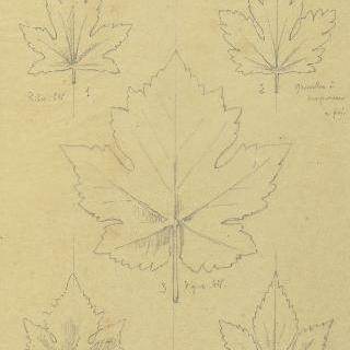 리브 잎, 구즈베리 잎, 포도나무 잎과 홉 잎 습작