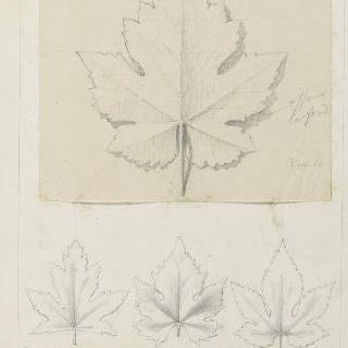 리브 잎, 포도나무 잎과 홉 잎 습작
